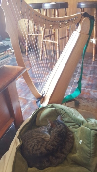 Leo and my Lap Harp. Every cat knows there is nothing better than a harp cover to sleep in!